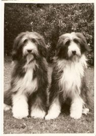 b.h.moonlight(left)+b.briquette of b. at two years old