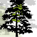 Black Isle Tree Services